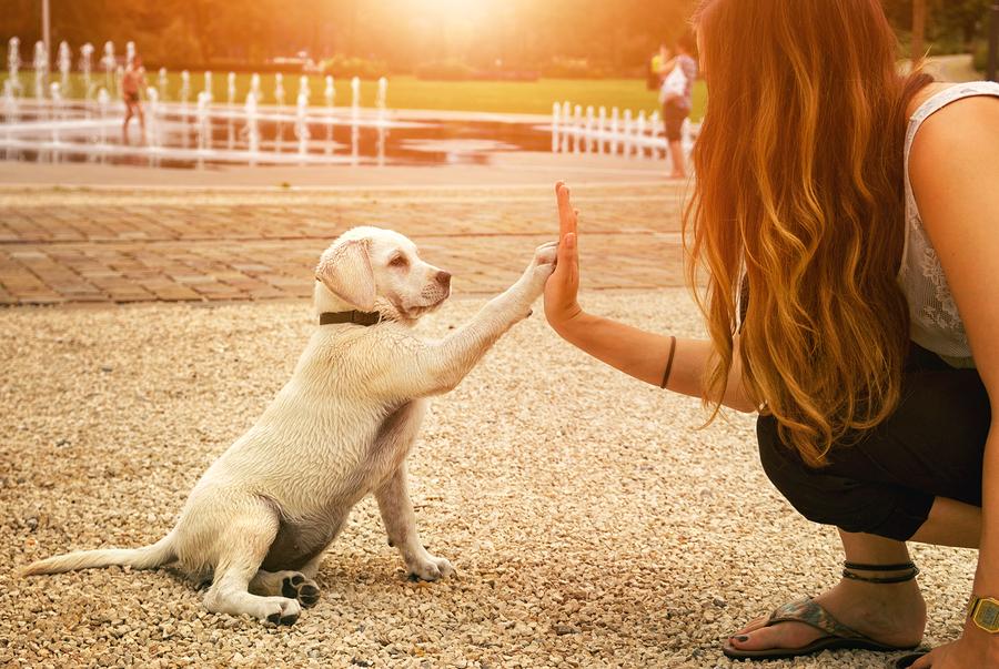 puppy high five